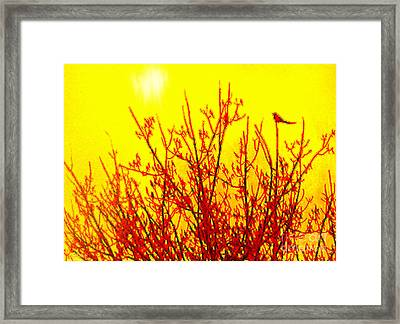 It's A Brand New Day Framed Print by Cristophers Dream Artistry