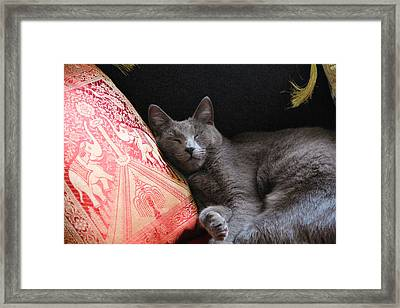 its a cats Life Framed Print