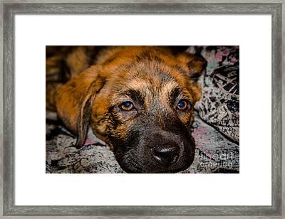 Its A Dogs Life Framed Print by Ronny Sczruba