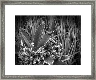 It's A Jungle Out There Framed Print by Thomas Young