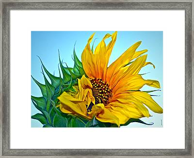 Framed Print featuring the photograph Its A New Dawn by Gwyn Newcombe