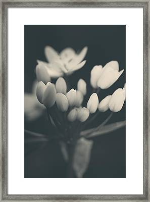 It's A New Life Framed Print