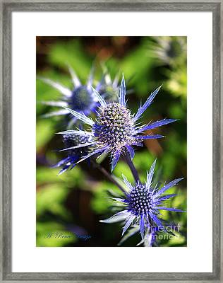 Its A Spiney Life Framed Print