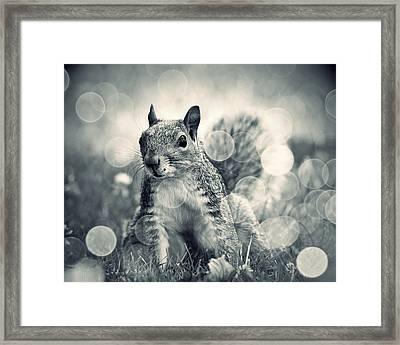 It's A Squirrel's World Too Framed Print by Aurelio Zucco