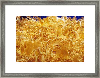 Its Alive Under Water Framed Print