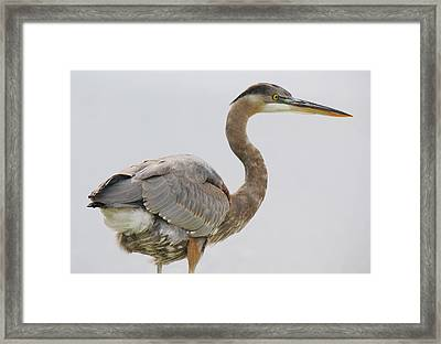 It's All In The Details - # 12 Framed Print by Paulette Thomas