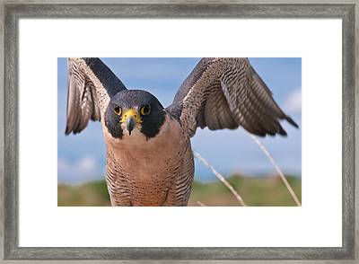 It's All In The Wings Framed Print by Mike Berenson