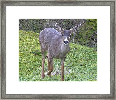Framed Print featuring the photograph It's Been A Long Winter by Rhonda McDougall