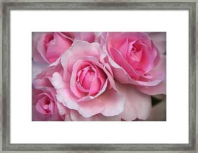It's Bloomin' Pink Framed Print by CarolLMiller Photography