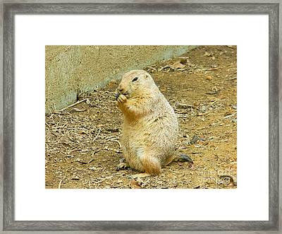 Framed Print featuring the photograph It's Chow Time by Emmy Marie Vickers