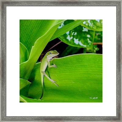 It's Easy Being Green Squared Framed Print by TK Goforth