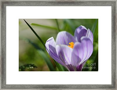 It's Finally Spring Framed Print by LHJB Photography
