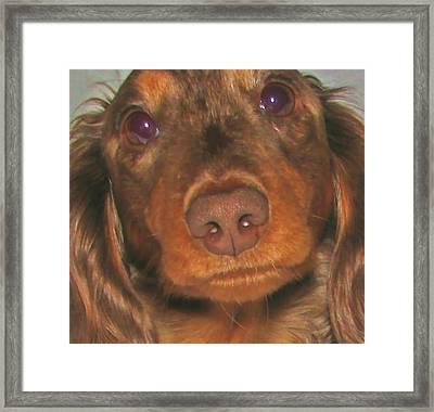 It's Hershey Framed Print by Victoria Sheldon