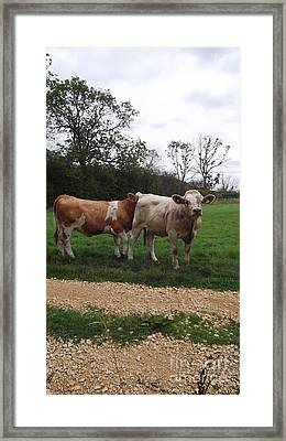 Its In There Somewhere Framed Print by John Williams