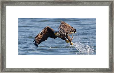 It's Just A Fish  Framed Print by Glenn Lawrence