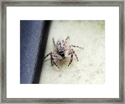 It's Lunch Time Framed Print by Atchayot Rattanawan