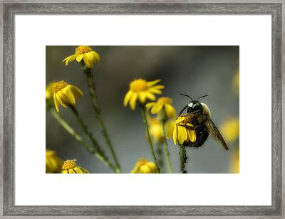 It's Mine-all Mine Framed Print