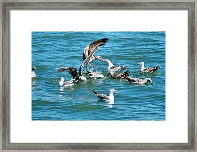 It's Mine Framed Print by Bob Wall