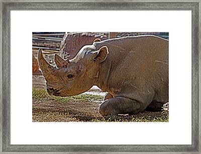 Its My Horn Not Your Medicine Framed Print