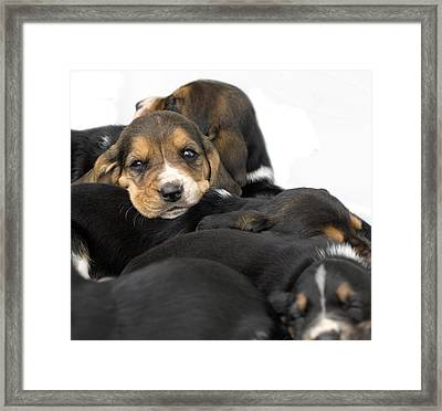 Its Nap Time Framed Print