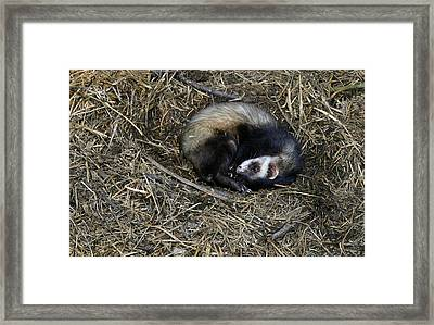 Its Naptime Framed Print by Nina Fosdick