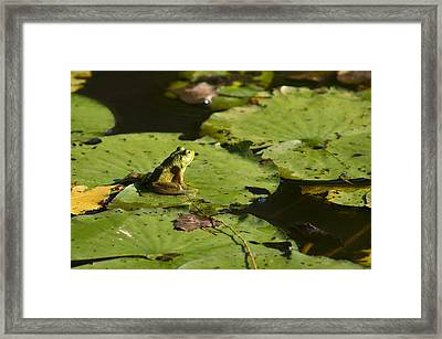 It's Not Easy . . . Framed Print