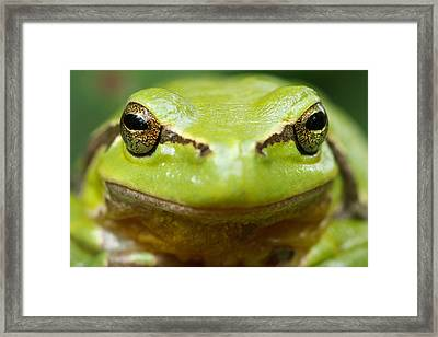 It's Not Easy Being Green _ Tree Frog Portrait Framed Print by Roeselien Raimond