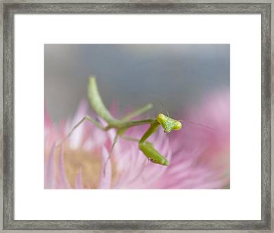 It's Not Easy Being Green Framed Print