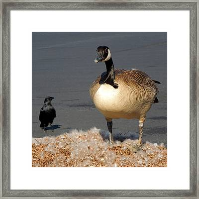 Framed Print featuring the photograph It's Not Mine by Pete Trenholm
