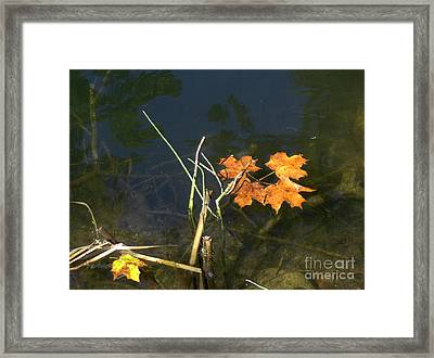 It's Over - Leafs On Pond Framed Print by Brenda Brown