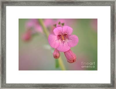 It's Pink Framed Print