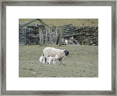 Framed Print featuring the photograph It's Spring Time by Tiffany Erdman
