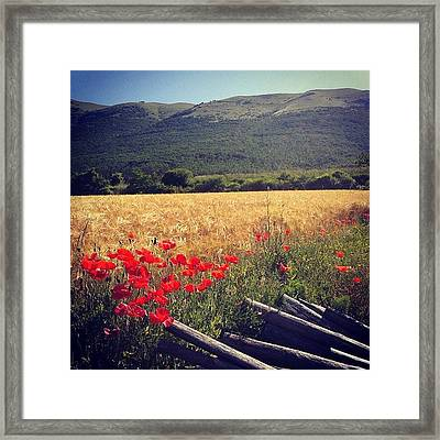 It's Summer! Framed Print