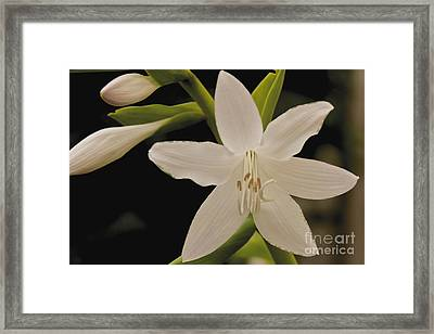 Its Summer Framed Print by William Norton