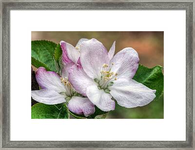 It's That Time Framed Print by JC Findley