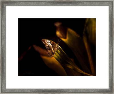 Its The Simple Things By Denise Dube Framed Print