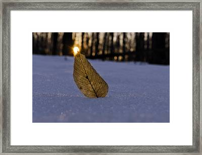 Its The Small Things Framed Print
