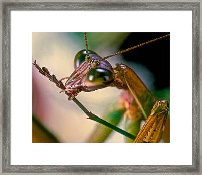 It's Time For A Good Cleaning Framed Print