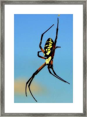 Itsy Bitsy Spider Framed Print