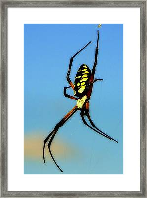 Itsy Bitsy Spider Framed Print by Karen Wiles