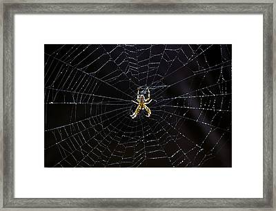 Itsy Bitsy Spider My Ass 2 Framed Print by Steve Harrington