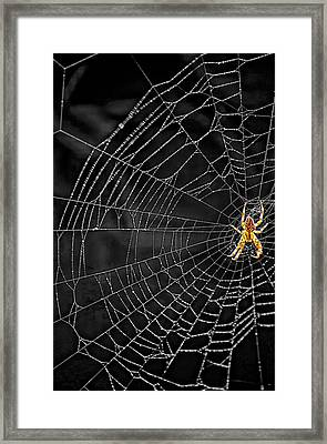 Itsy Bitsy Spider My Ass 3 Framed Print by Steve Harrington