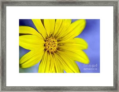 Itsy Bitsy Yellow Desert Flower Framed Print by Bryan Freeman