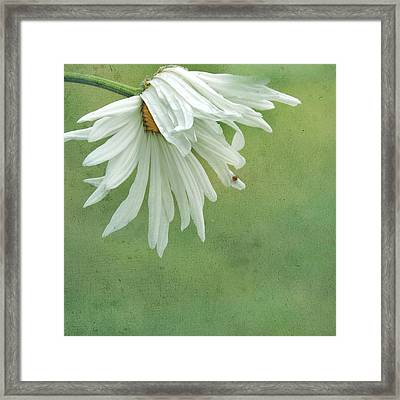 Framed Print featuring the photograph Itsy Spider by Sally Banfill