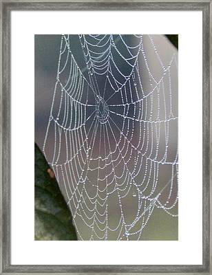 Ittsy Bittsy Spider Framed Print by John Glass
