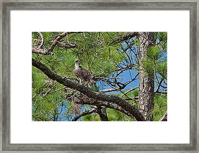 I've Got An Eye On You Framed Print by Frank Feliciano