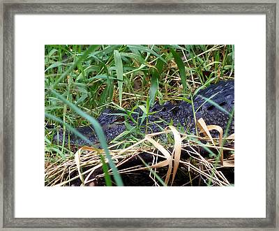 Framed Print featuring the photograph I've Got My Eye On You by Chris Mercer