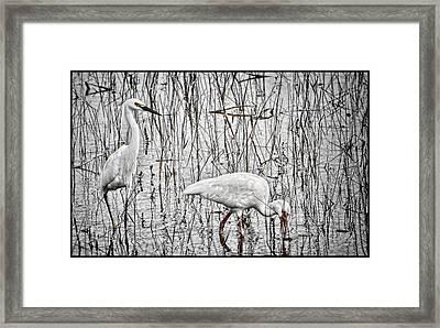 I've Got Your Back Framed Print by Kathleen Scanlan
