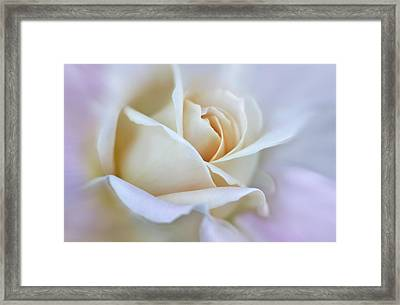 Ivory And Pink Abstract Rose Flower Framed Print by Jennie Marie Schell