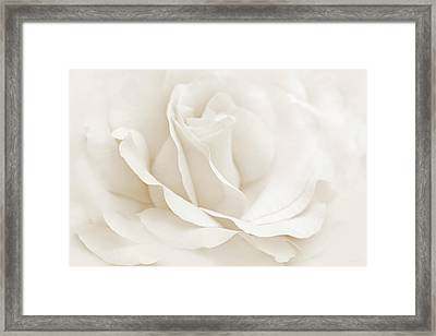 Ivory Ballerina Rose Flower Framed Print by Jennie Marie Schell